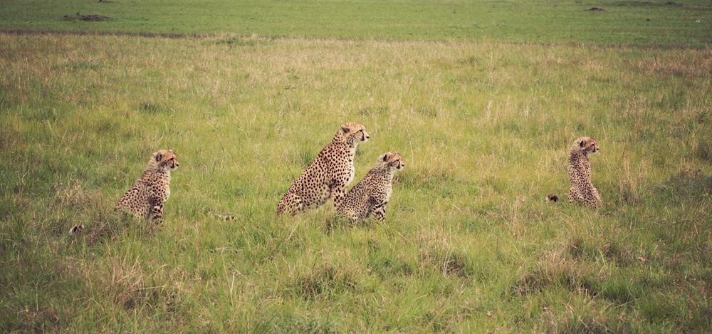 Day10_Cheetah-Family.jpg