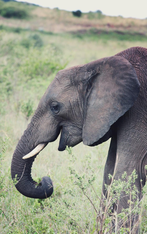 Day11_Elephants_011500px.jpg