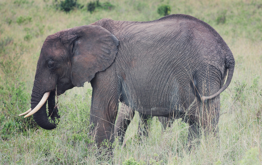 Day11_Elephants_021500px.jpg