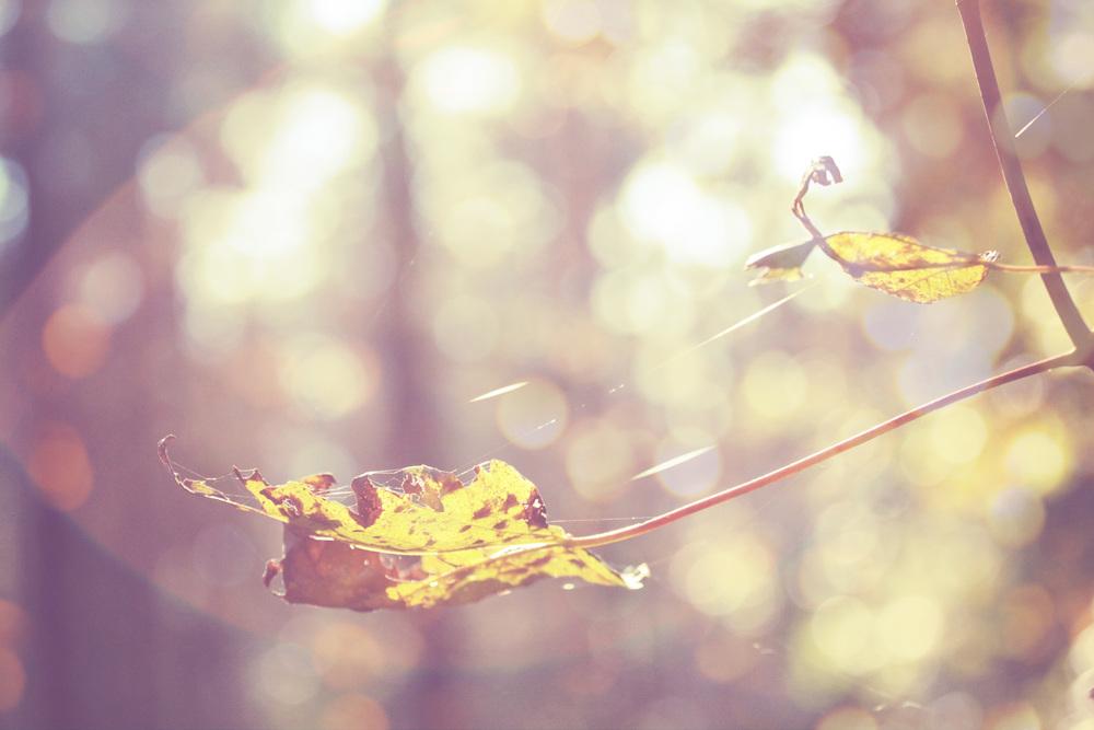 Autumn_08.jpg