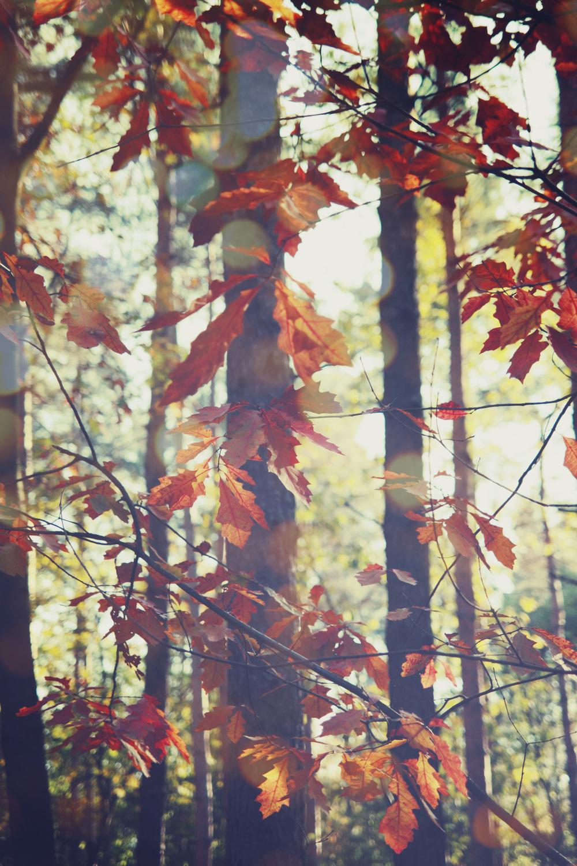 Autumn_07.jpg