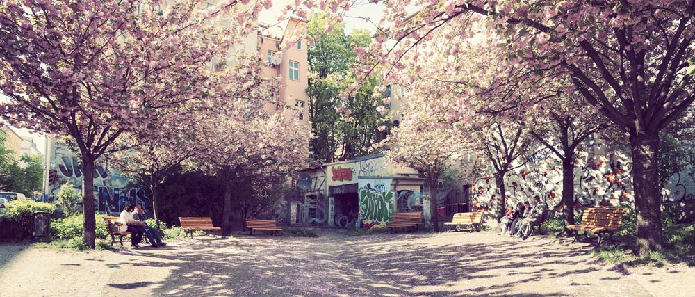 Tree Blossom Pano.jpg