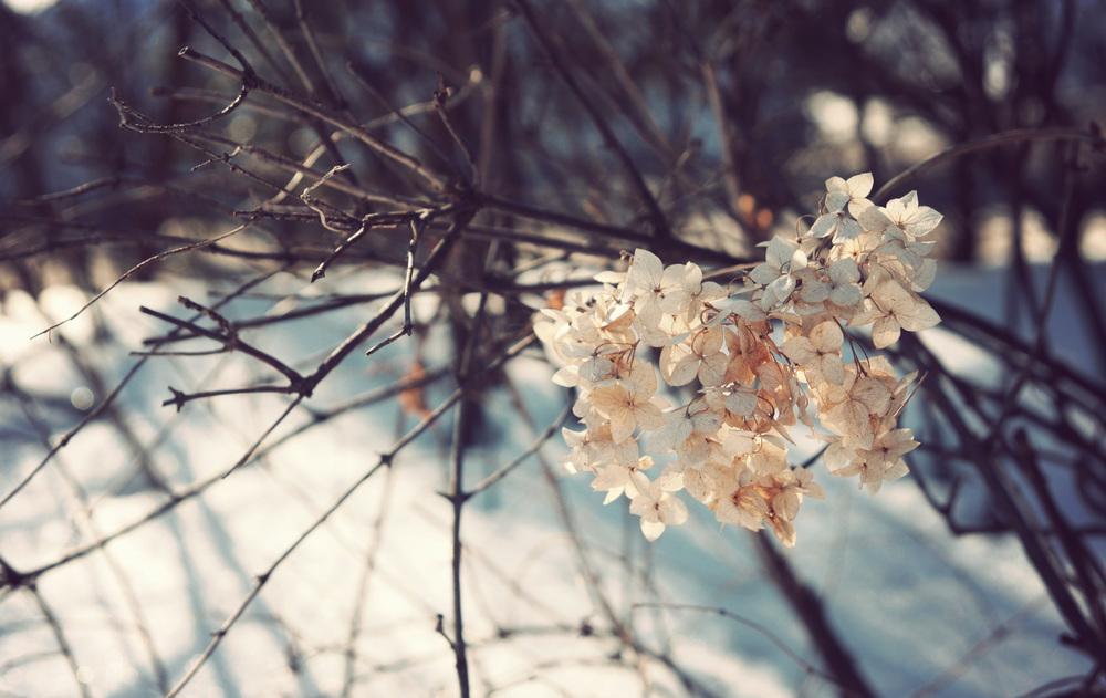 Snow-Flowers.jpg