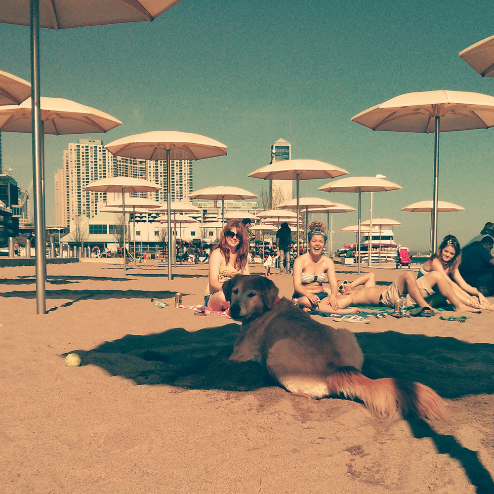 This dog was awesome. First he dug a giant hole in the sand....
