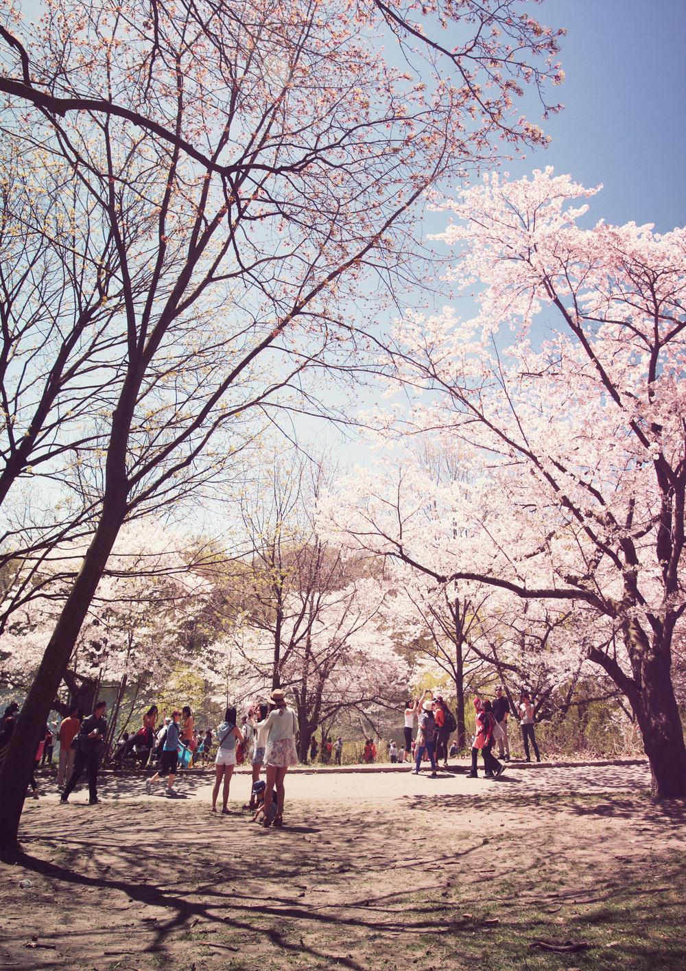 High-Park_01s.jpg