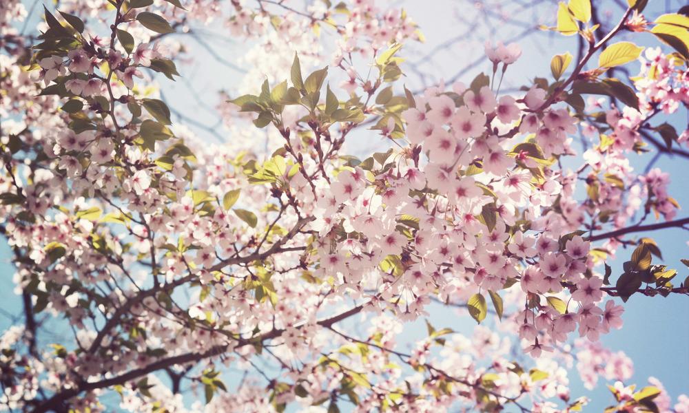 High-Park_09.jpg