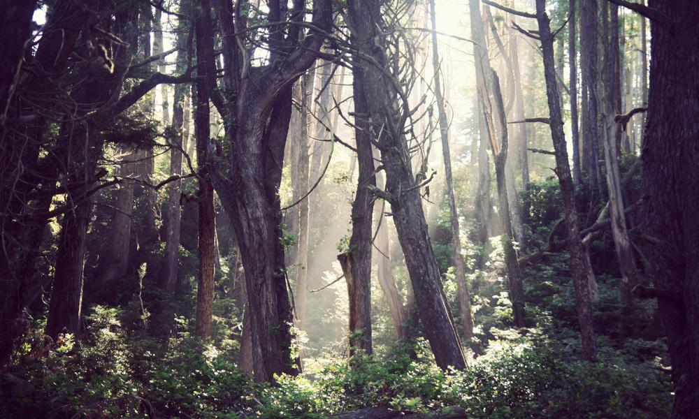 Wya-Point-Treelights_01.jpg