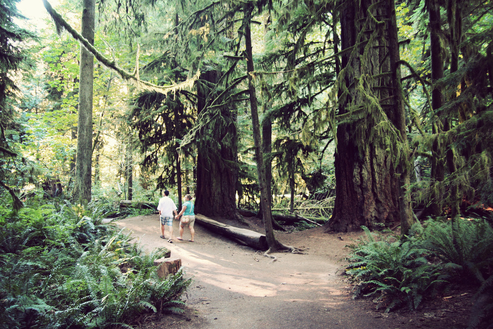 Cathedral-Grove_13.jpg