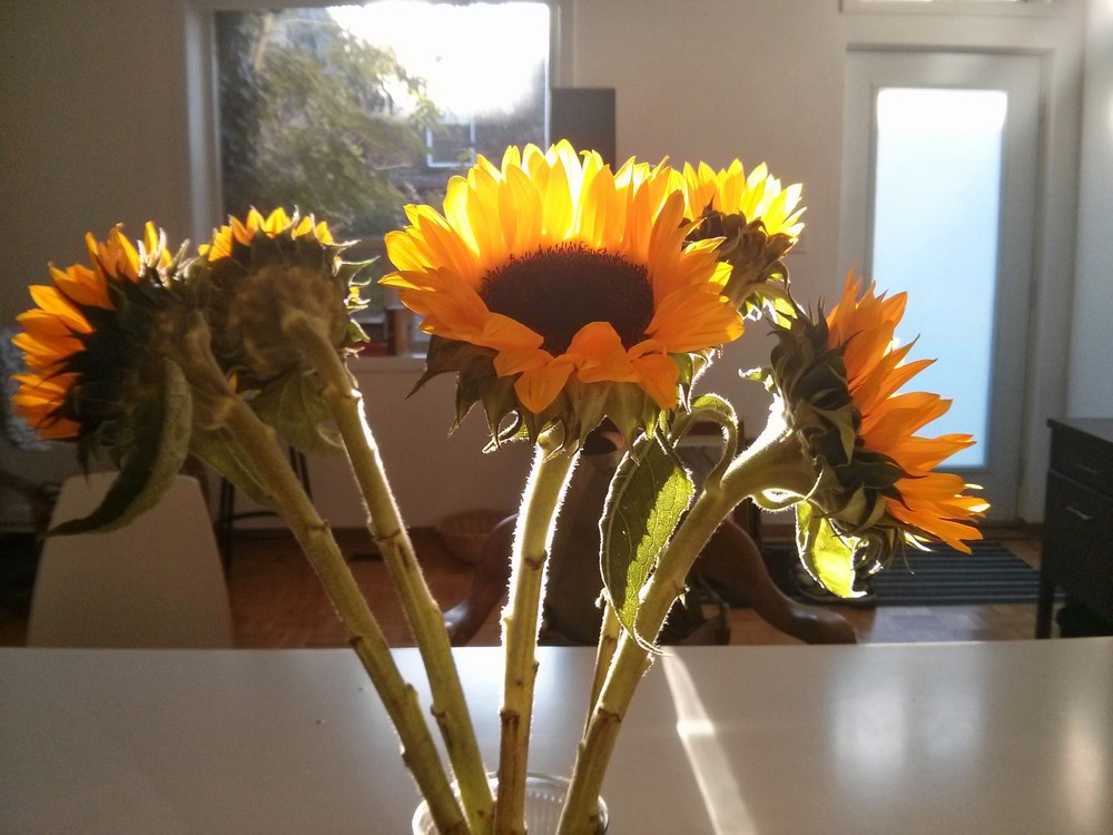 Sunshiney Sunflowers!