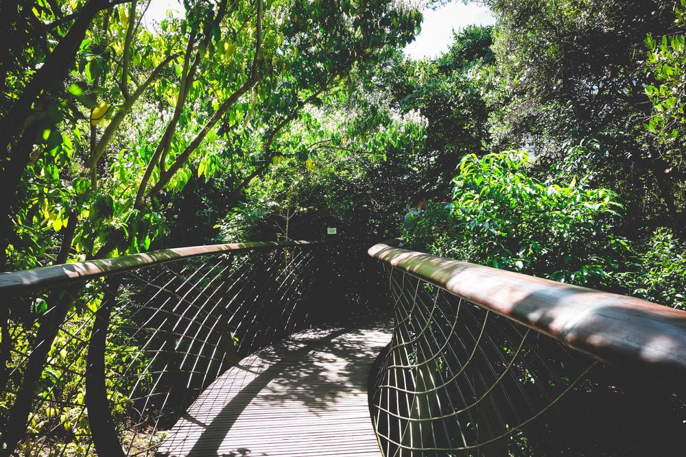 Kirstenbosch-9.jpg