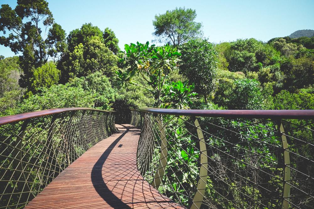 Kirstenbosch-14.jpg