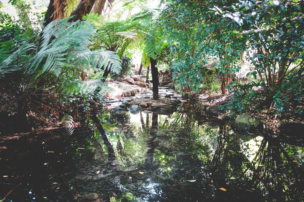 Kirstenbosch-25.jpg