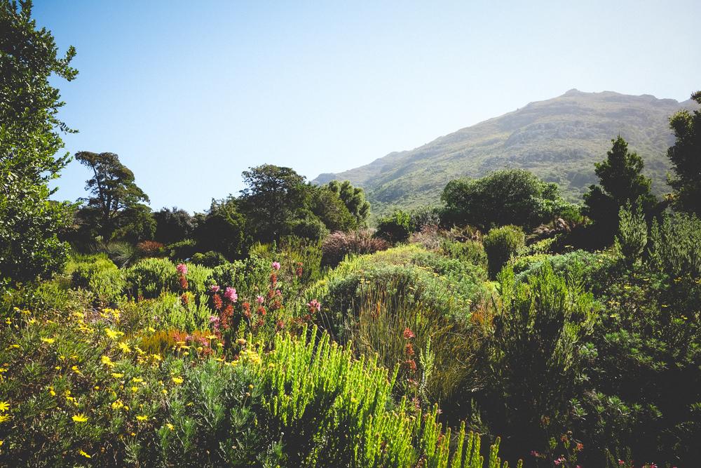 Kirstenbosch-29.jpg
