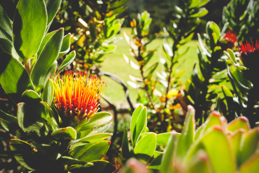 Kirstenbosch-35.jpg