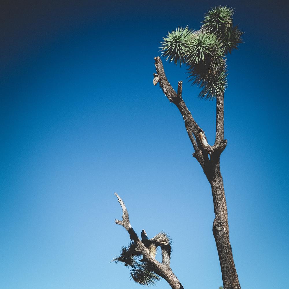 Joshua-Tree-41.jpg