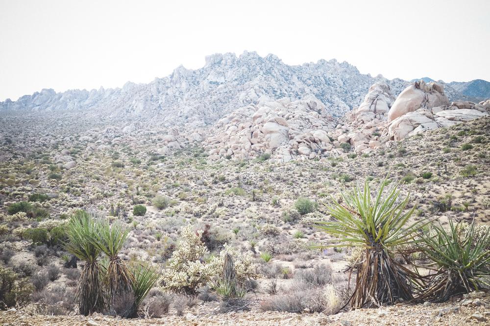 Mojave-Desert-8.jpg