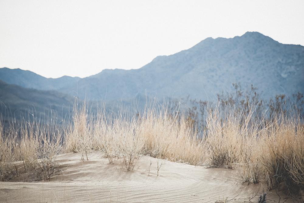 Mojave-Desert-22.jpg