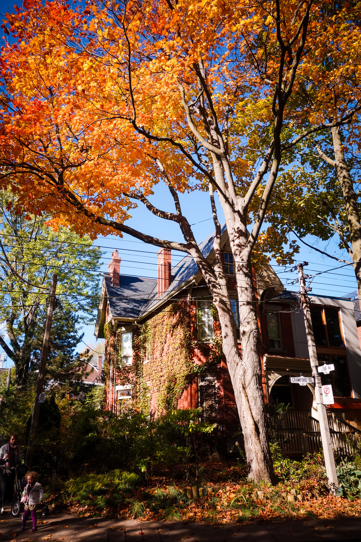 Toronto-Autumn-2.jpg
