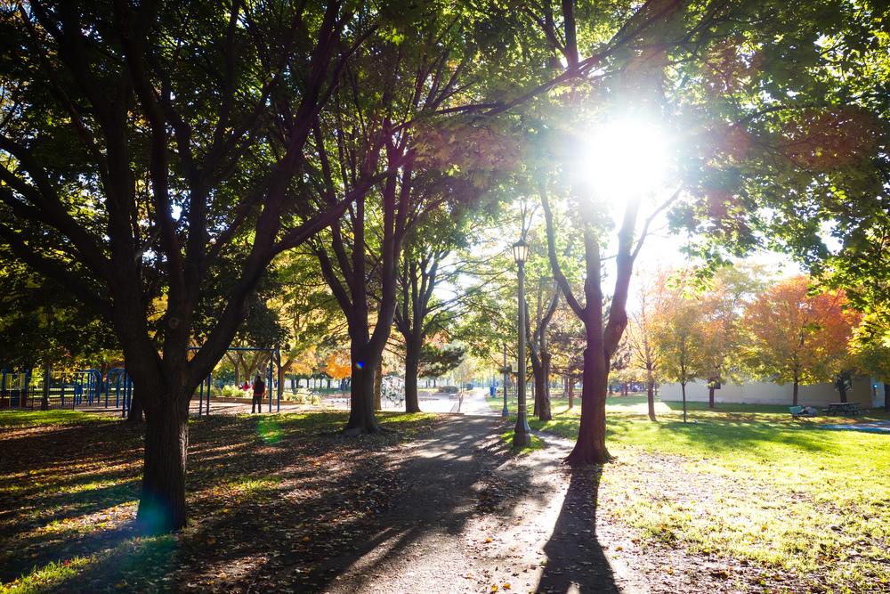 Toronto-Autumn-27.jpg