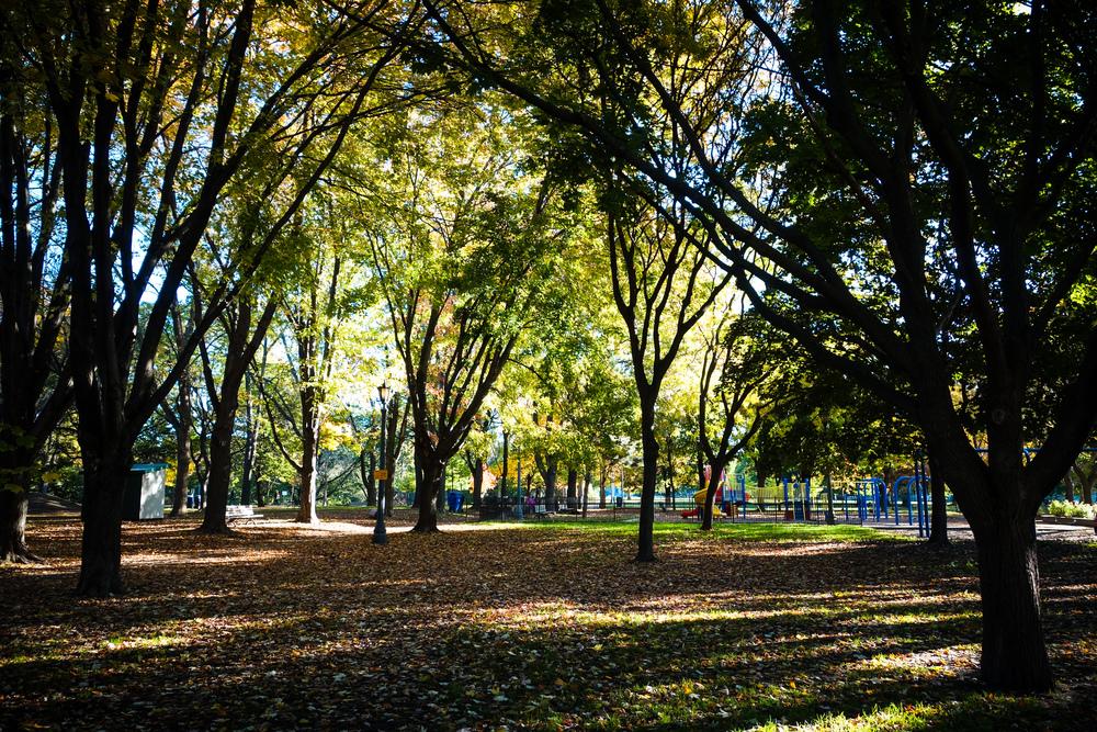 Toronto-Autumn-28.jpg