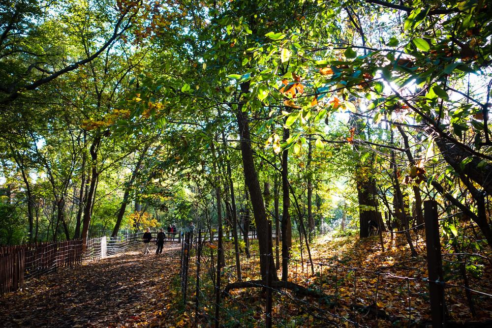 Toronto-Autumn-31.jpg