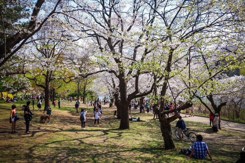 High-Park-8.jpg