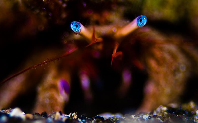 Hermit crab - Ερημίτης κάβουρας