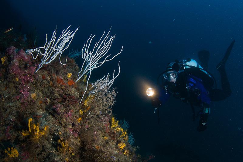Investigating a deep Mediterranean reef with white gorgonians (Eunicella singularis)
