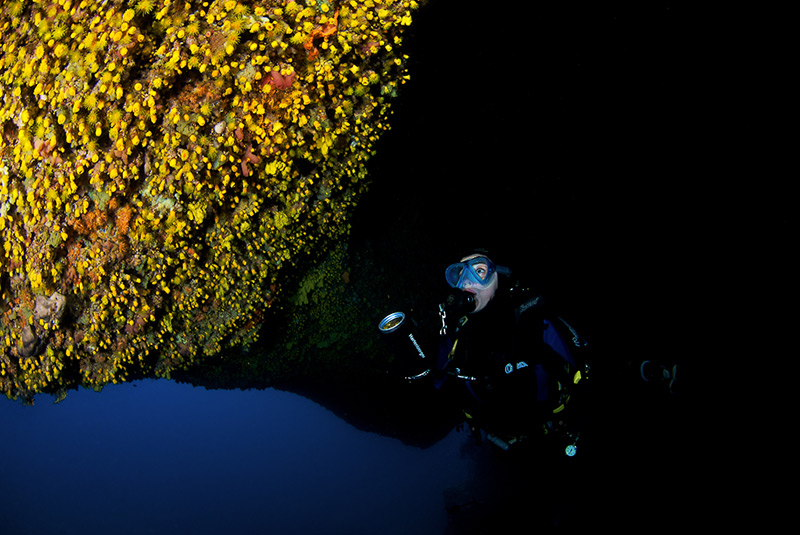 Investigating the ceiling of a cavern full of sunset cup corals (Leptopsammia pruvoti)
