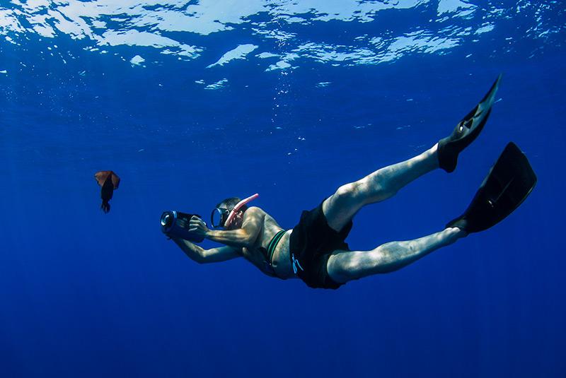 Filming a squid in pelagic waters