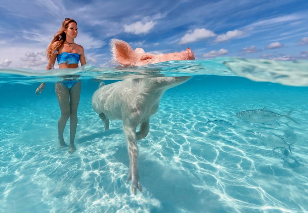 pigss202b.jpg