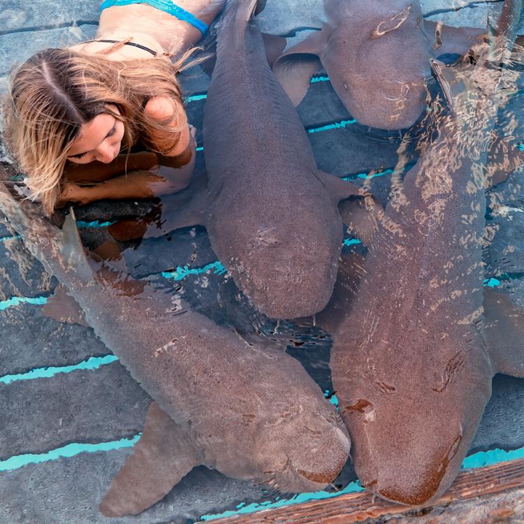 sharks92a.jpg