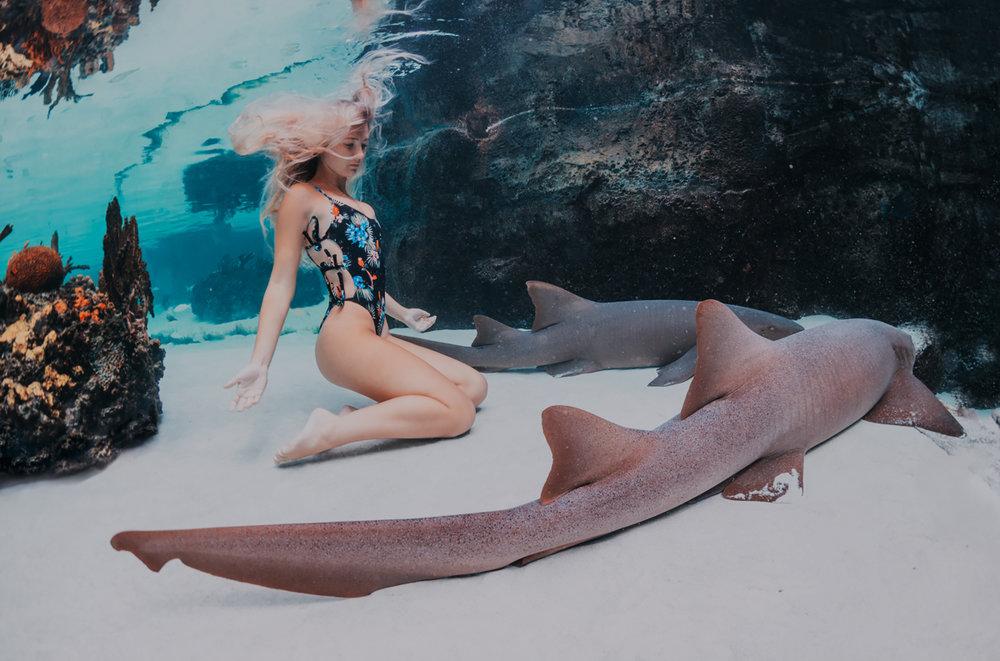 underwater350.jpg
