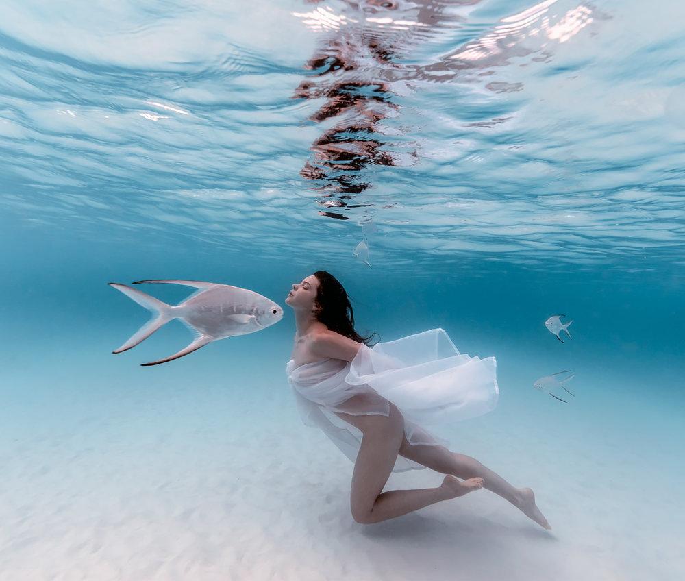 ocean_fish324web2.jpg