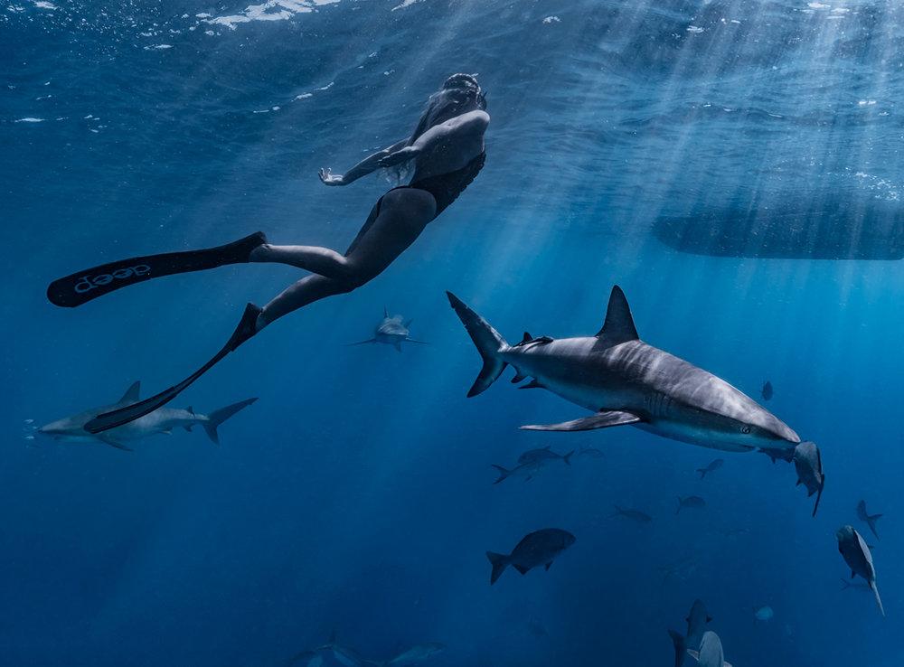 sharks1.jpg