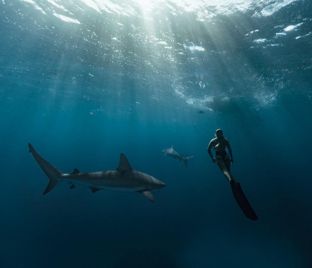 sharks3_bnt_bahamasgirl.jpg