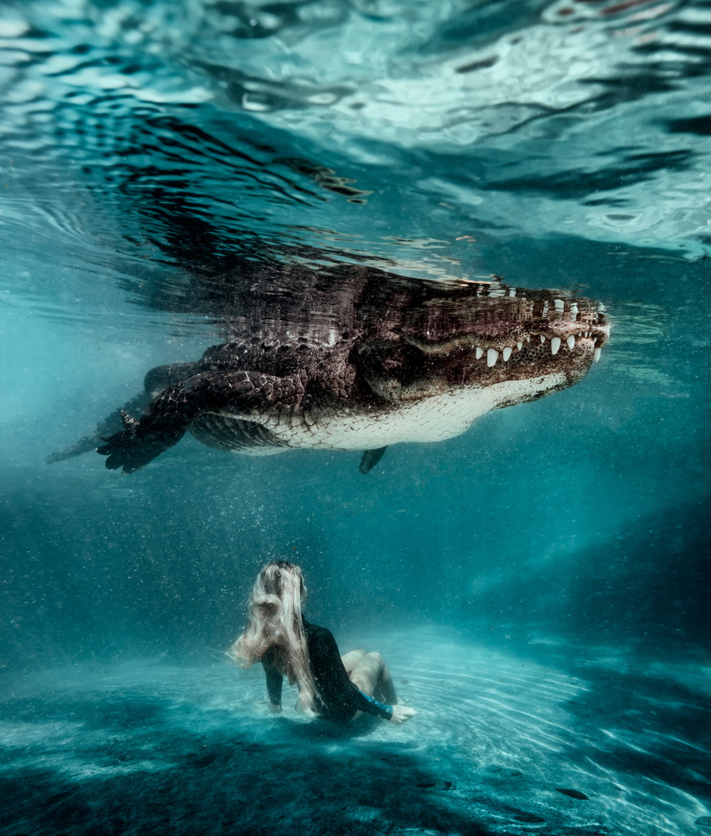 gator40.jpg