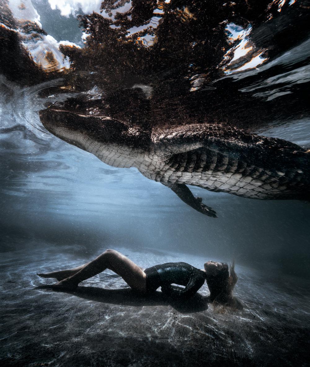 gator21.jpg