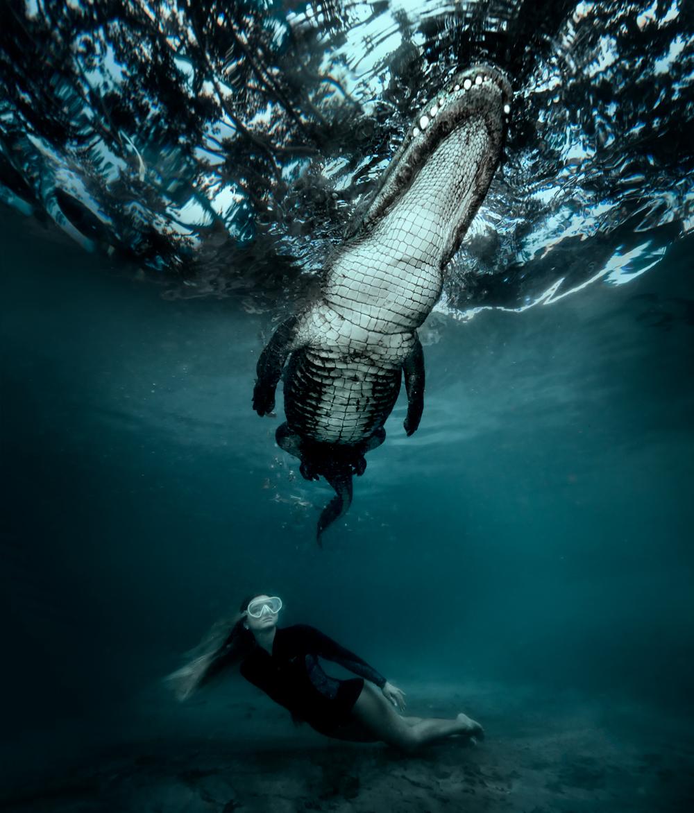 gator02.jpg