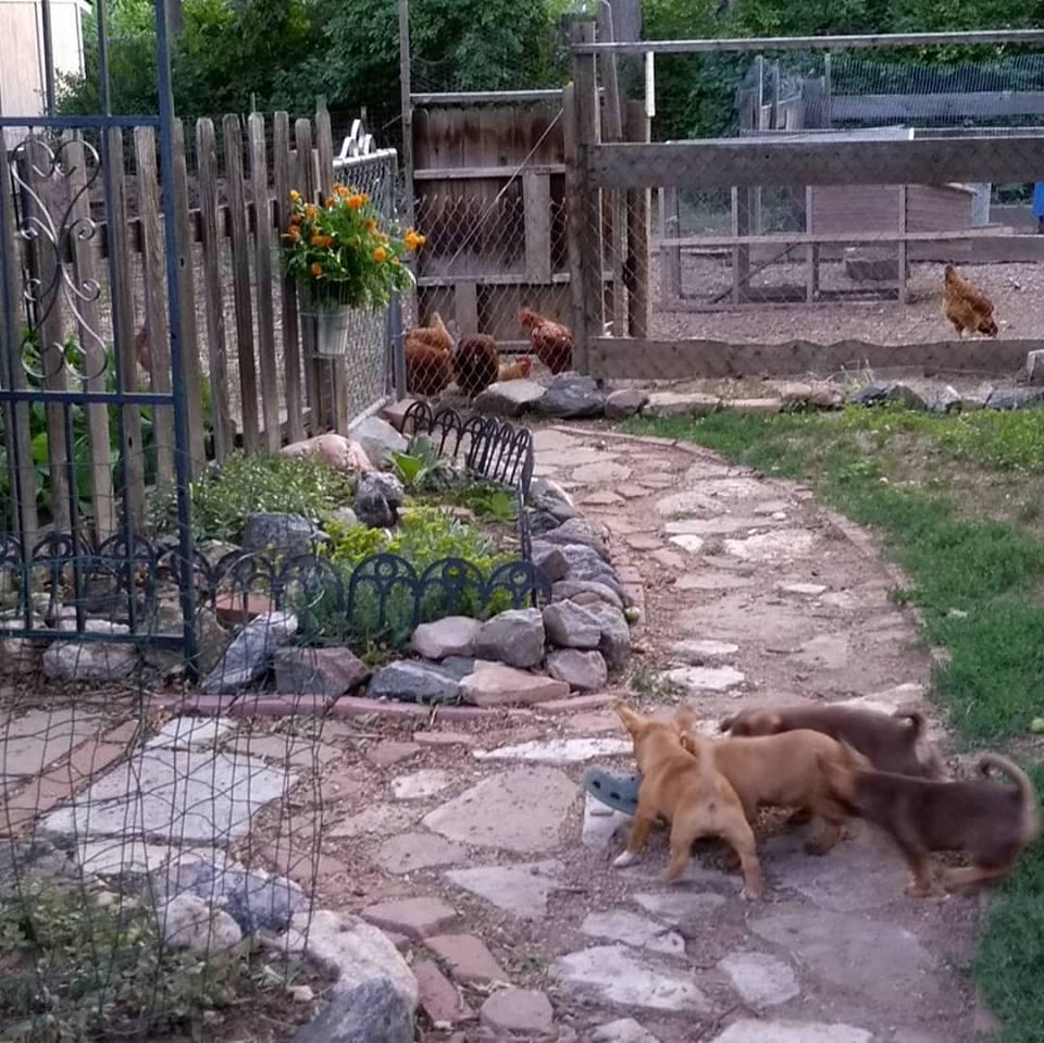 puppy pathway.jpg