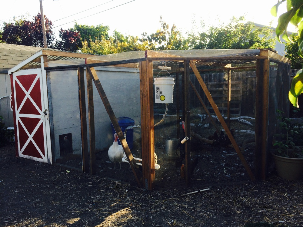 Our chicken & turkey coop.