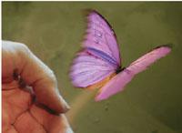 hands_butterfly.jpg
