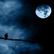 moonlightsm.jpg