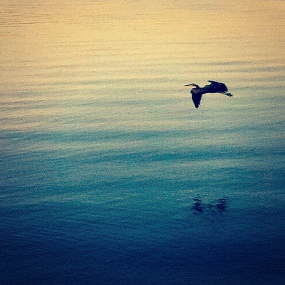 heron - freedom and creativity