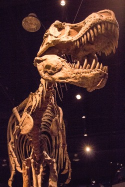 From the Royal Tyrrell Museum in Drumheller, Alberta. For Axel, the budding archeologist,