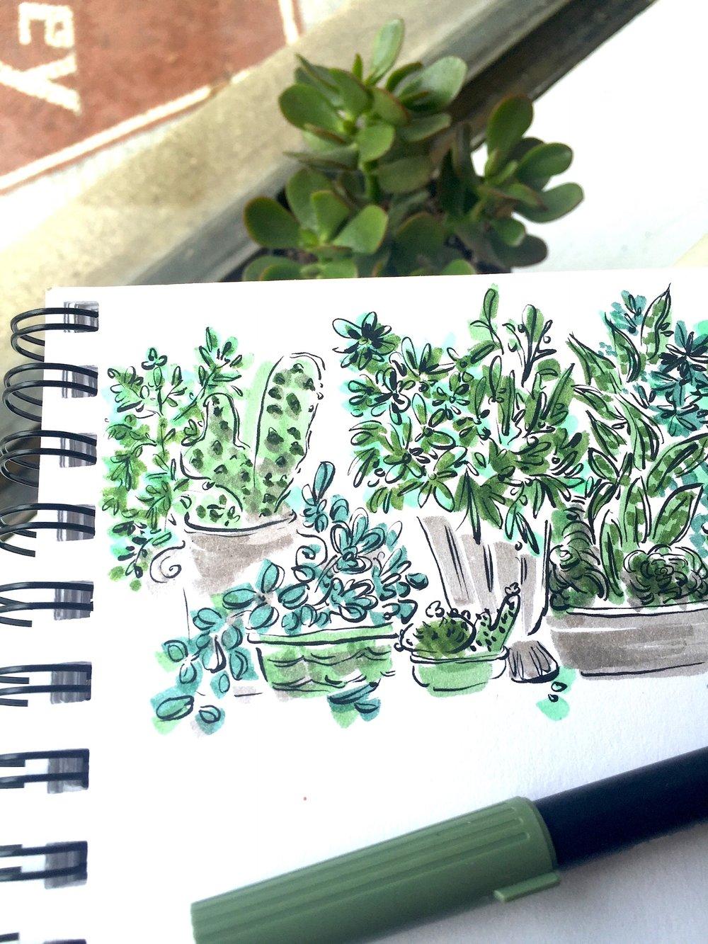 plantsLPT.jpg