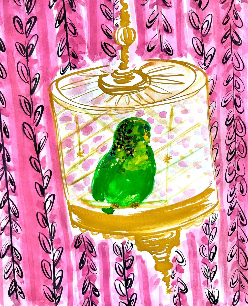 The rare   budgerigarus pink wallpaperus