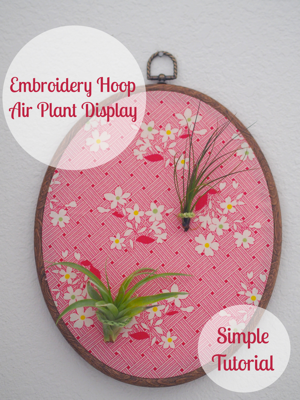 Simple And Cute Air Plant Embroidery Hoop Display Tutorial U2014 Mary Heather Browne