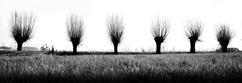 090928-Knotwilgen-grijs.jpg