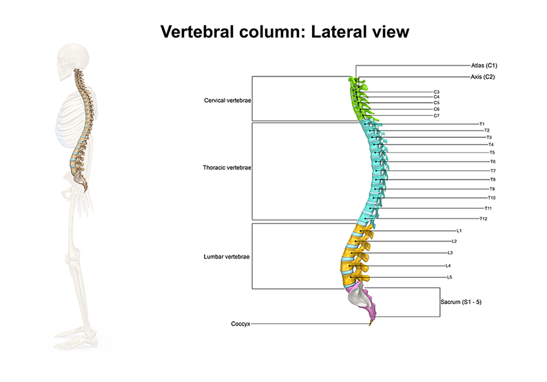 Correct spine alignment